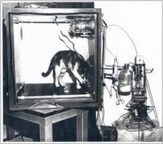 image d'un chat dans un labo en entrainement avec la machine neurofeedback